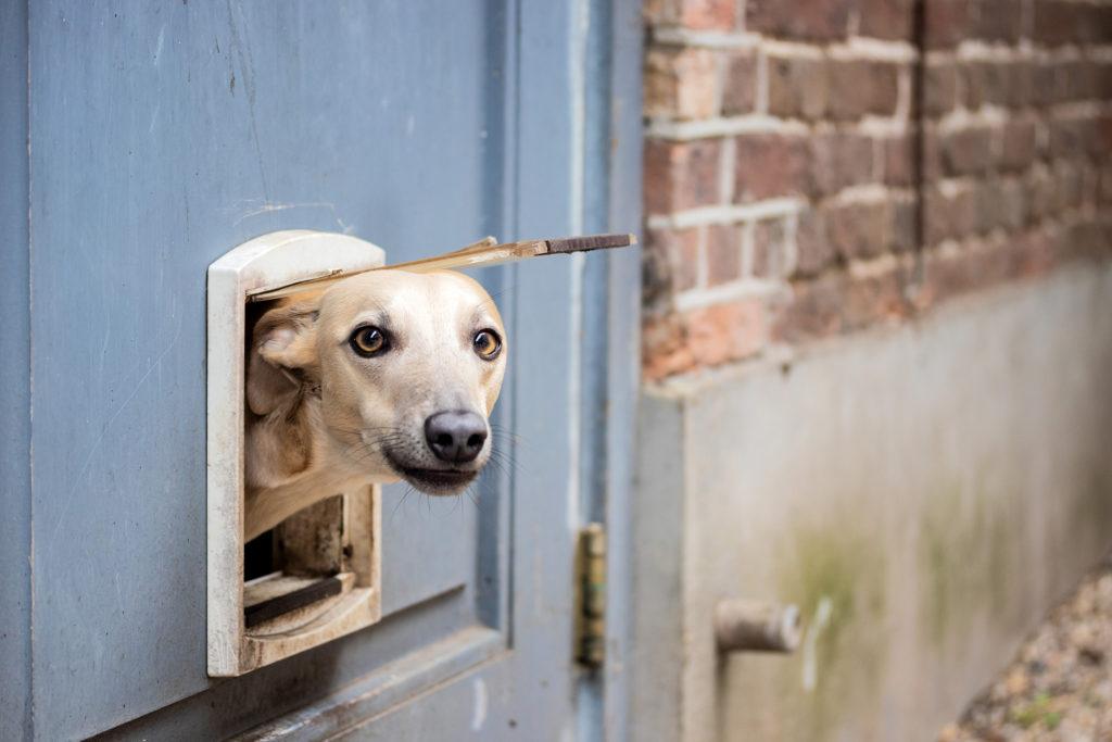 Uit Veluwe - Fotografie - Ouwendorperhoeve - Hond